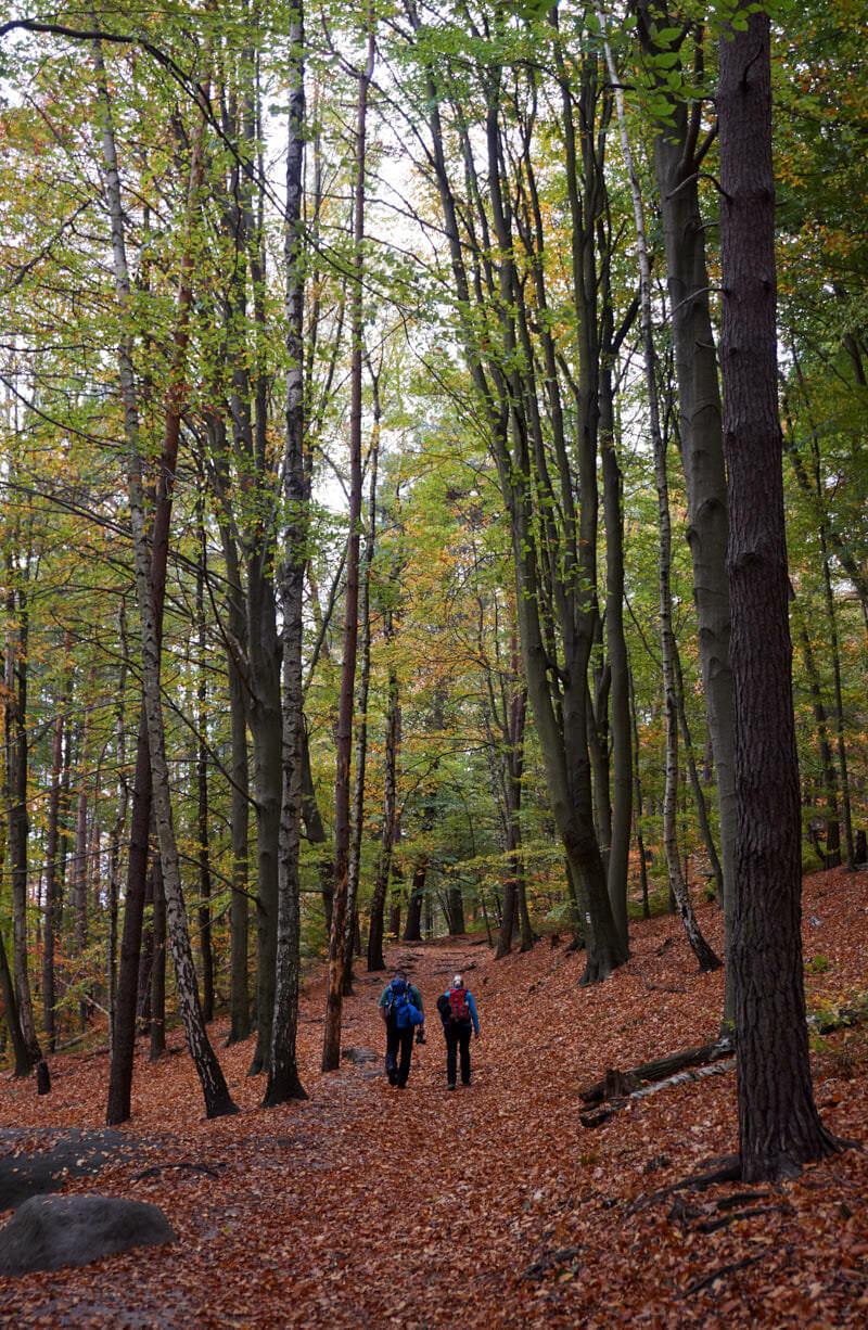 Gemütlicher Waldweg am südlichen Lilienstein