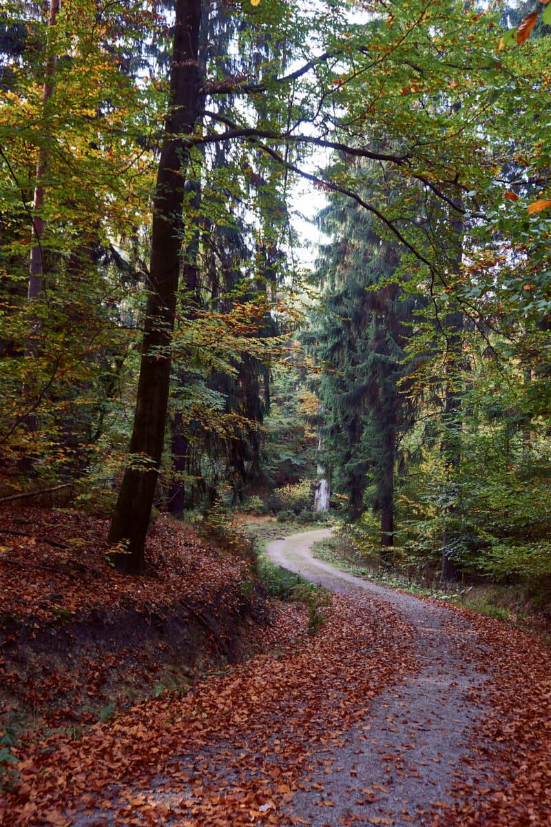 leuchtender Herbst im Elbsandsteingebirge