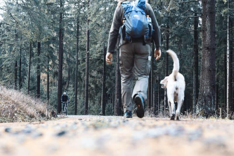 Wandern ist des Hundes Lust