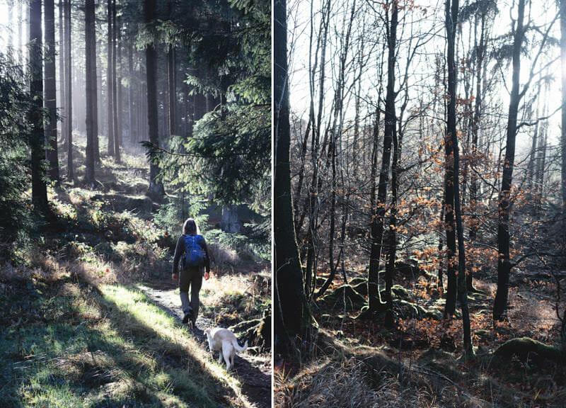 Wanderung Kästeklippen Bad Harzburg