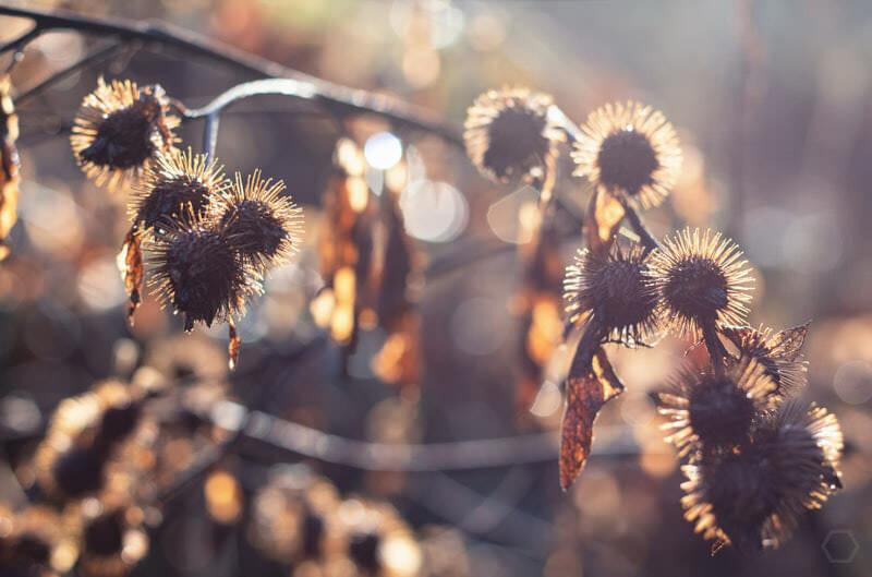 Sonnenstrahlen im Herbst