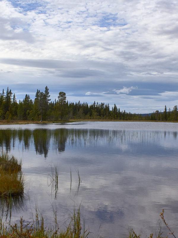 Schwedens Landschaft geprägt von viel Natur